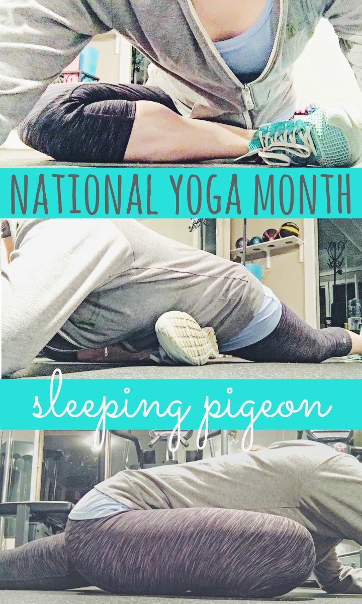 nym-sleeping-pigeon